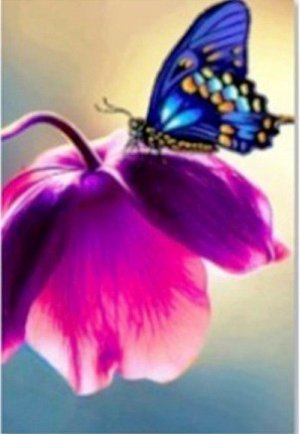 A608 Алмазная картина Бабочка 50*40см без подрамника в коробке