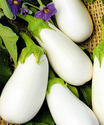 Дачный сезон! НЕ ПРОПУСТИ! Более 2000 видов семян!   — Семена Баклажаны — Семена овощей
