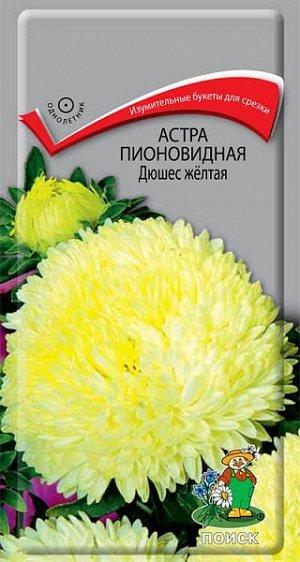 Астра Пионовидная Дюшес жёлтая