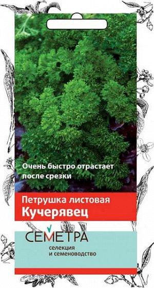 Петрушка листовая Кучерявец