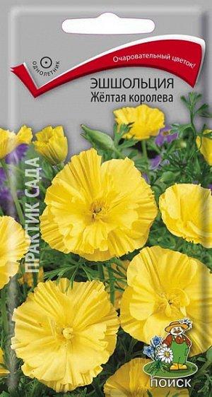 Эшшольция Желтая королева ЦП