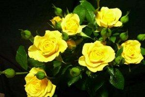 Спрей желтый