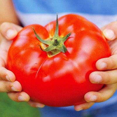 Большой выбор товаров в наличии!   — Семена и Удобрения Фертика и Осмокот — Семена