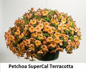 Петхоа Supercal Terracotta