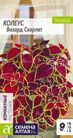 Цветы Колеус Визард Скарлет/Сем Алт/цп 5 шт.