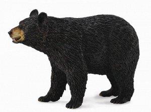 Американский чёрный медведь