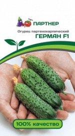 Семена Огурец партенокарпический Герман F1 5 шт