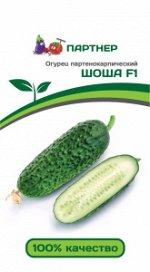 Семена Огурец партенокарпический Шоша F1  5 шт