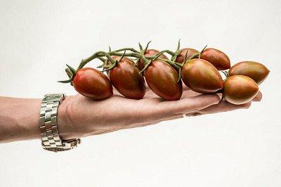 Семена Партнер и Смеко - свободное в счете! В пути! — Томаты для защищённого грунта — Семена овощей