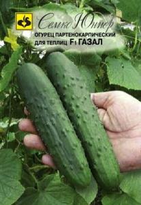 ТМ Семко Огурец партенокарпический Газал F1/ гибриды с длиной плодов 25 см