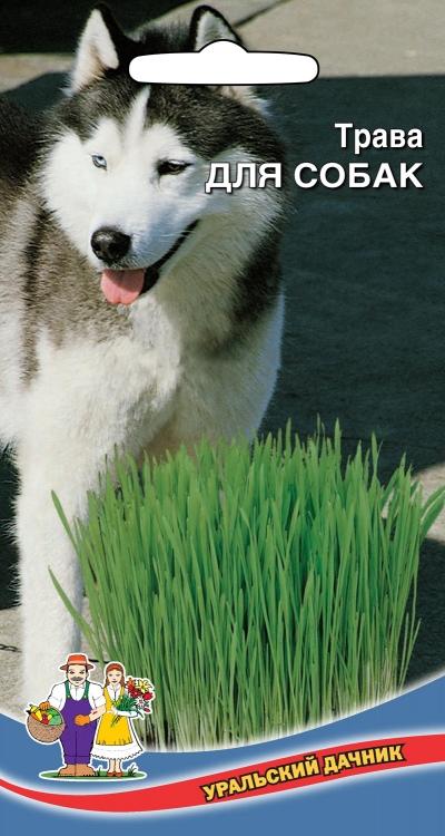 Семена🌽 Уральский дачник 🌽 ваш богатый урожай! Уже в пути!  — Трава для животных — Семена зелени и пряных трав