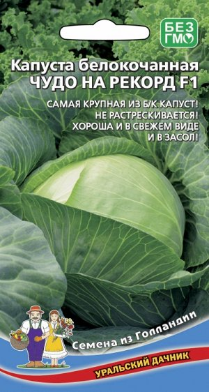Капуста белокочанная ЧУДО НА РЕКОРД F1