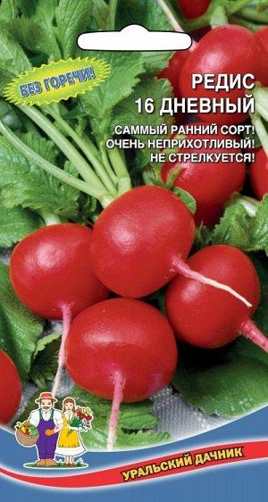 Редис 16 ДНЕВНЫЙ