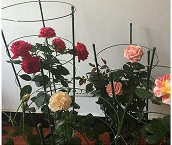 🚀ВАКУУМ+ Экспресс! Долгожданное пополнение склада! — Для цветоводов и садоводов — Садовый инвентарь