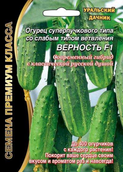 Отличные семена Уральский дачник. В ПУТИ — Огурец