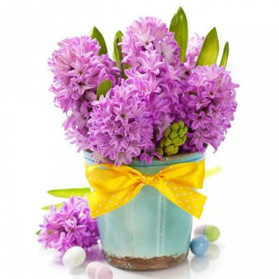 Живые цветы к 8 марта:Азалии, Крокусы, Гиацинты_6/21