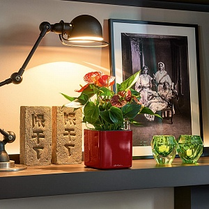 Кашпо Кашпо Кьюб Глосси 14 Ярко-красный блестящий с системой автополива Высота, см: 14 Ширина, см: 14 Длина, см: 14 Дизайн кашпо гармонирует с различными стилями интерьера и идеально подходит как для
