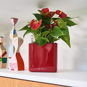 Умное кашпо L♥ech♥uza (оригинал!) - 47 — Glossy,Орхидея,Комплект Green Wall Home Kit-НОВИНКИ!!! — Кашпо и горшки