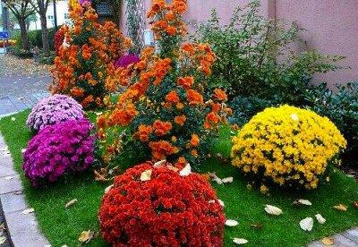 Многолетники (Голландия) - посадка Весной * Оплата 50/50 — Остальные виды Многолетних Цветов