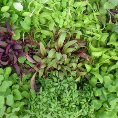 Русский огород - семена овощей, цветов  В наличии — Микрозелень — Семена овощей