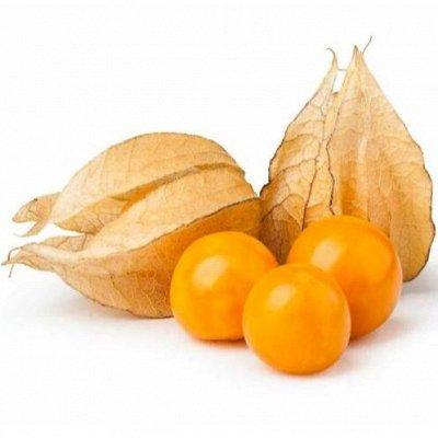 Русский огород - семена овощей, цветов  В наличии — Физалис — Семена овощей
