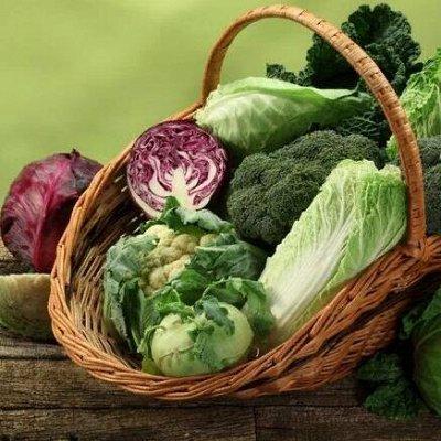 Русский огород - семена овощей, цветов  В наличии — Капуста — Семена овощей