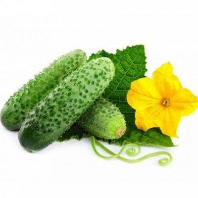 Русский огород - семена овощей, цветов  В наличии — Огурцы — Семена овощей