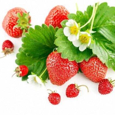 Русский огород - семена овощей, цветов  В наличии — Клубника + Земляника — Семена овощей