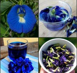 81- Товары из солнечного Тайланда! Успей до повышения!!!     — Акция на синий чай! — Красота и здоровье