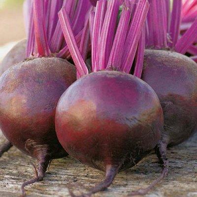 Семена Сибирской селекции — СВЕКЛА — Семена овощей