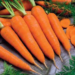 "Морковь Королева осени ""Кольчуга NEW"" (2г)"