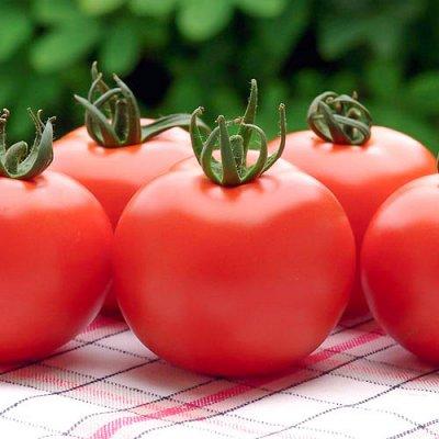 Семена Сибирской селекции, быстрая доставка. — Все семена в наличии — Семена овощей