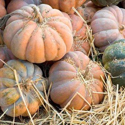Семена Сибирской селекции, готовимся к новому сезону — Тыква