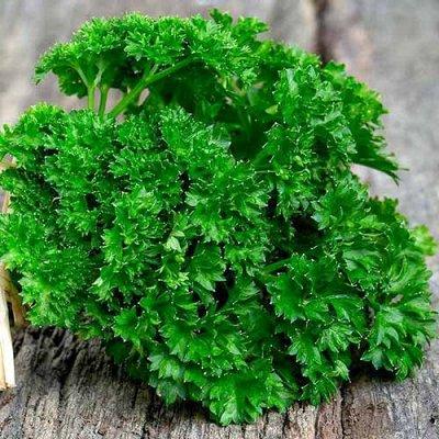 Семена Сибирской селекции — ТРАВЫ — Семена зелени и пряных трав