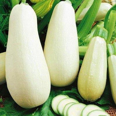 Семена Сибирской селекции — КАБАЧКИ — Семена овощей