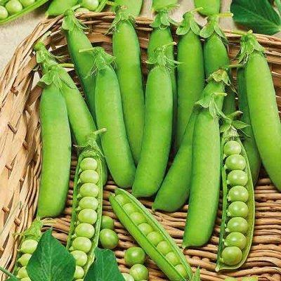 Семена ГАВРИШ- гарантия качества. В пути — ГОРОХ — Семена овощей