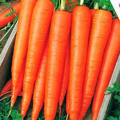 Семена Сибирской селекции — МОРКОВЬ — Семена овощей