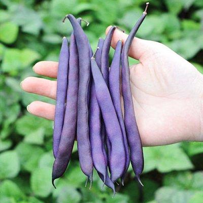 Семена Сибирской селекции — ФАСОЛЬ — Семена овощей