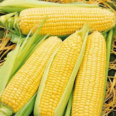 Семена Сибирской селекции — КУКУРУЗА — Семена овощей
