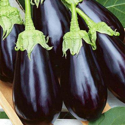 Семена Сибирской селекции — БАКЛАЖАНЫ — Семена овощей