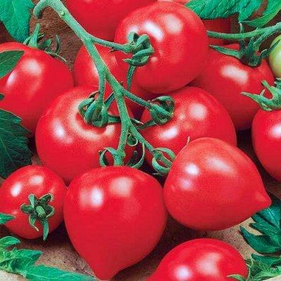 Семена Азии, Мязина, Сибирский сад — все в наличии! — Томаты Сибирский Сад — Семена овощей