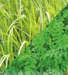 Моё поместье. Товары для сада! — Удобрения. Сидераты (Зеленые удобрения) — Семена