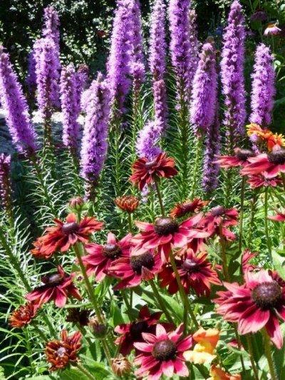 Распродажа растений. Быстрая раздача. — Многолетняя рассада. — Сад и огород