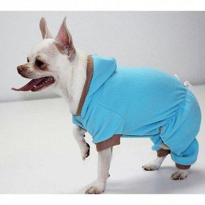 Пижон - для собак - 17 — Комбинезоны — Для собак