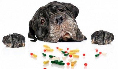 На здоровье! Укрепляем иммунитет! Всем + спортсменам. — Для животных — Для животных