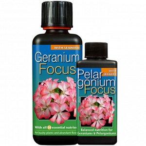 Geranium Focus
