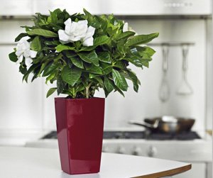 Кашпо LEIZISURE для цветов HG-GQ4