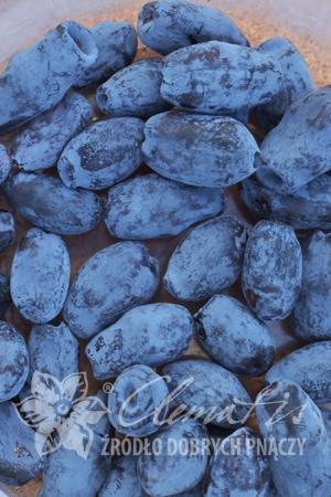 Жимолость камчатская Аврора