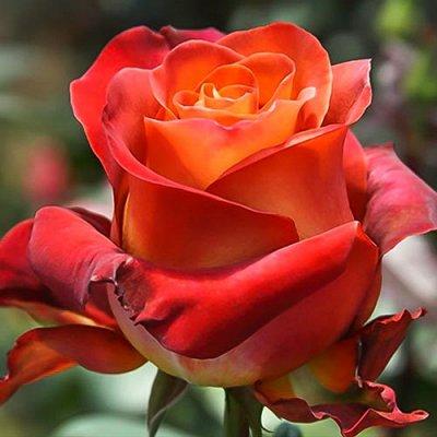 Нужная покупка👍 Двигай здоровье в массы: стань рыбаком-асом! — Розы Алтая — Декоративноцветущие