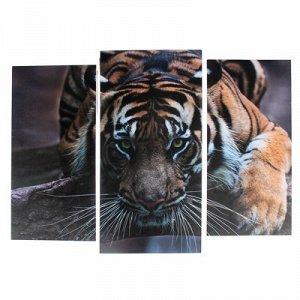 """Модульная картина """"Тигровый взгляд"""" (2-25х52; 1-30х60) 60х80 см"""